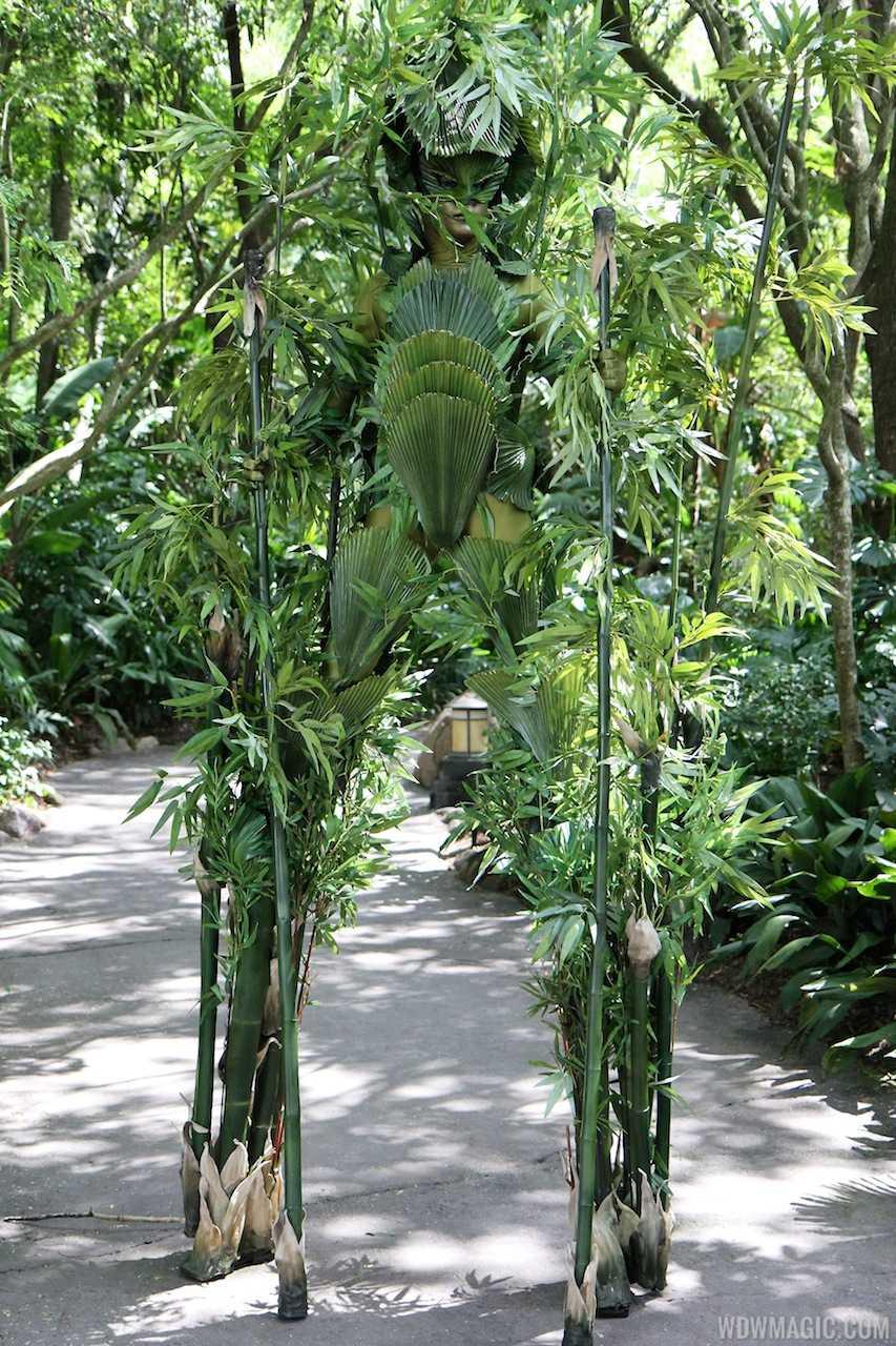 Bamboo at Disney's Animal Kingdom