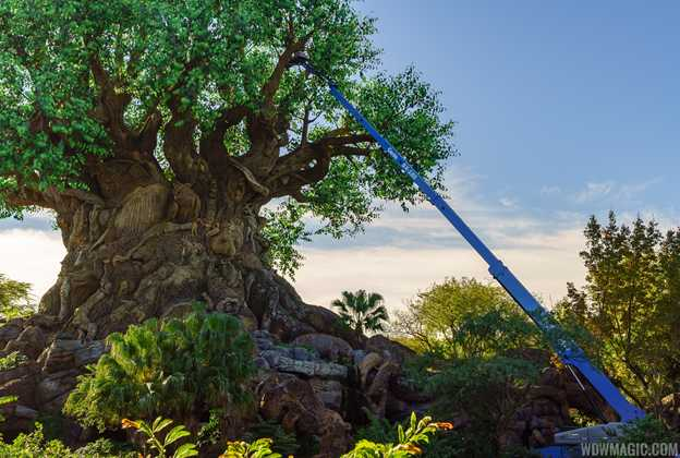Crane working on the Tree of Life