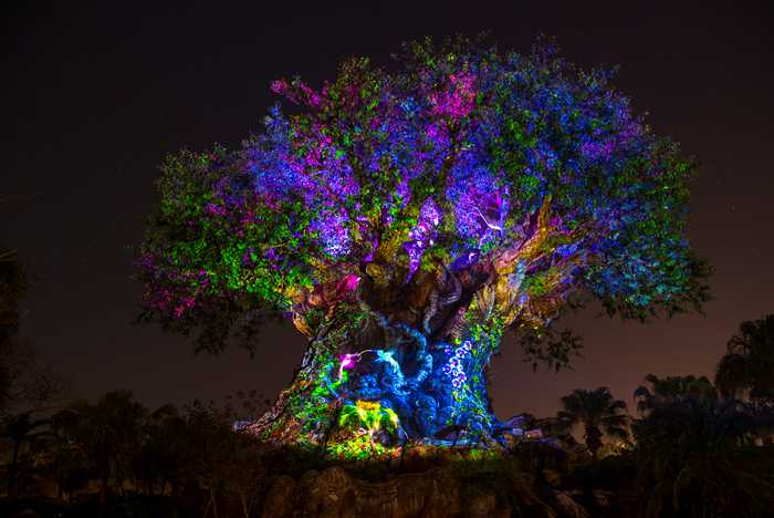 The Tree of Life Awakens