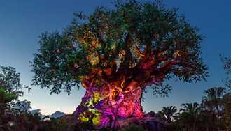 VIDEO - Drones surround the Tree of Life for special media event moment