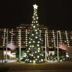 Contemporary Resort holiday decorations 2009