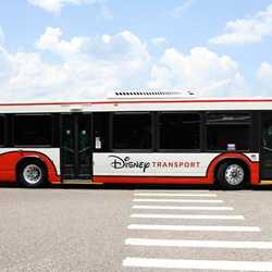 2013 Walt Disney World bus fleet color scheme